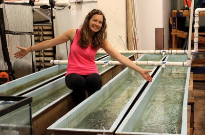 Natalie Sopinka's PhD research on the effects of stress in Pacific salmon 3