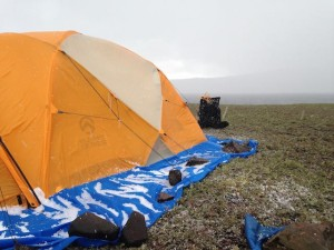 Acoena_tents with hail