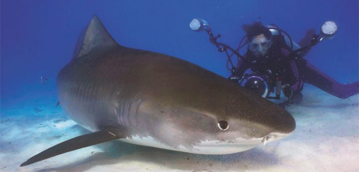 OTN-supported shark tracking in the Bahamas and Florida