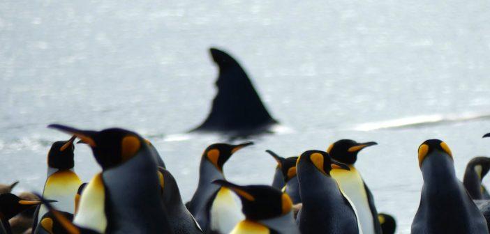 Kerguelen saga: part deux — Crozet & Antarctic fauna (episode 3)