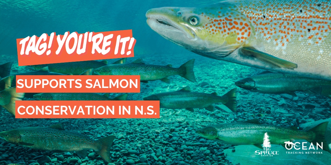 Tag! You're It! beer supports salmon conservation in Nova Scotia
