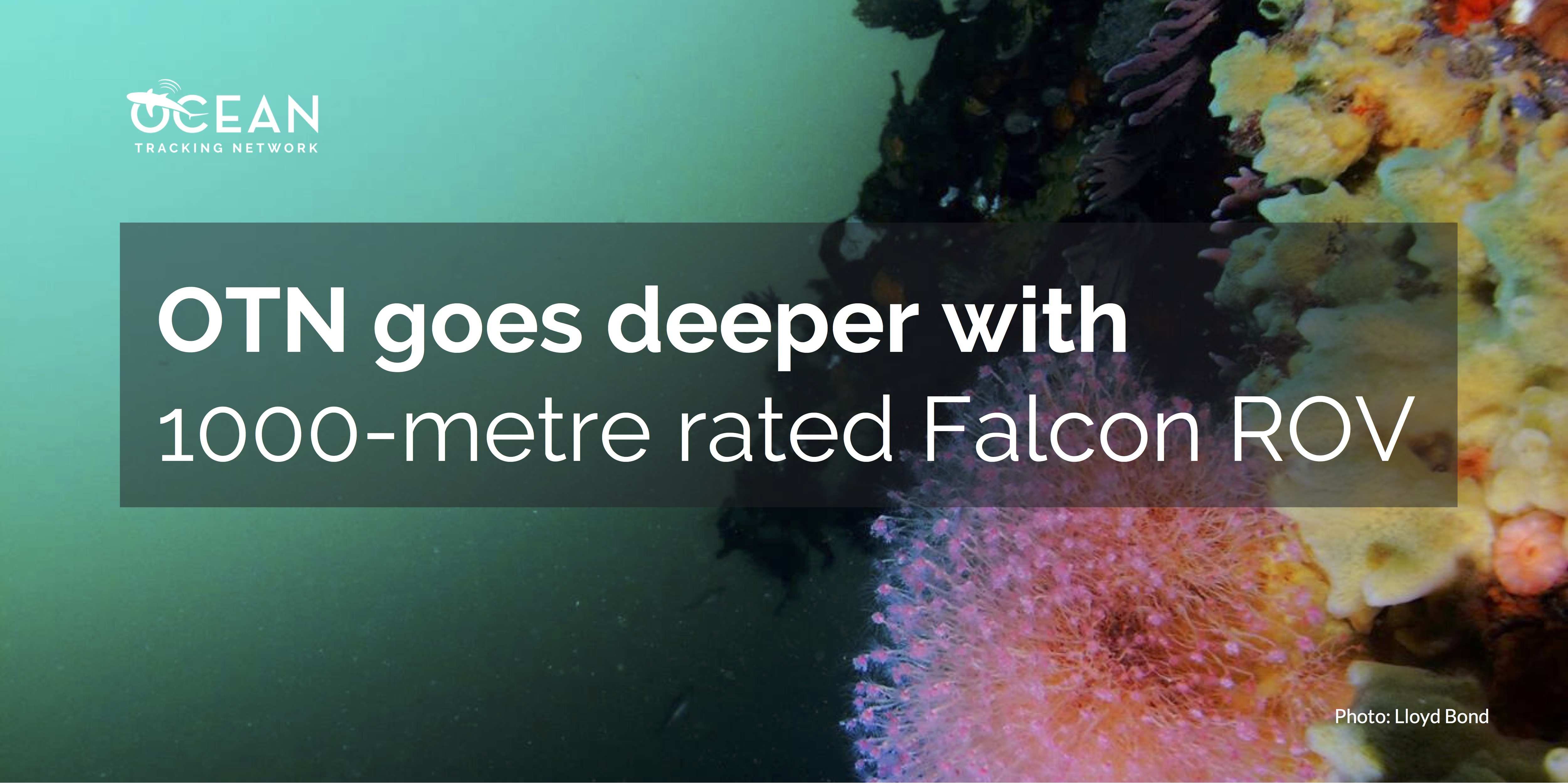 OTN goes deeper with 1000-metre rated Falcon ROV