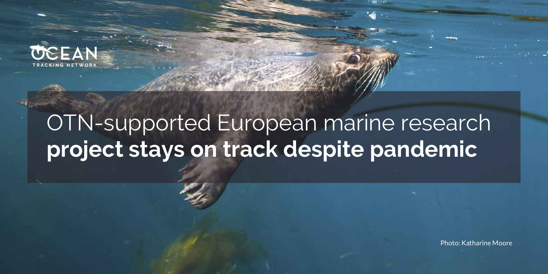 OTN-supported European marine research project stays on track despite pandemic