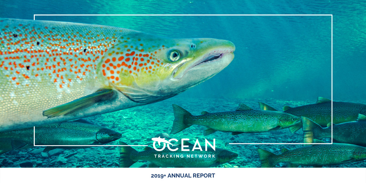 The Ocean Tracking Network 2019+ annual report