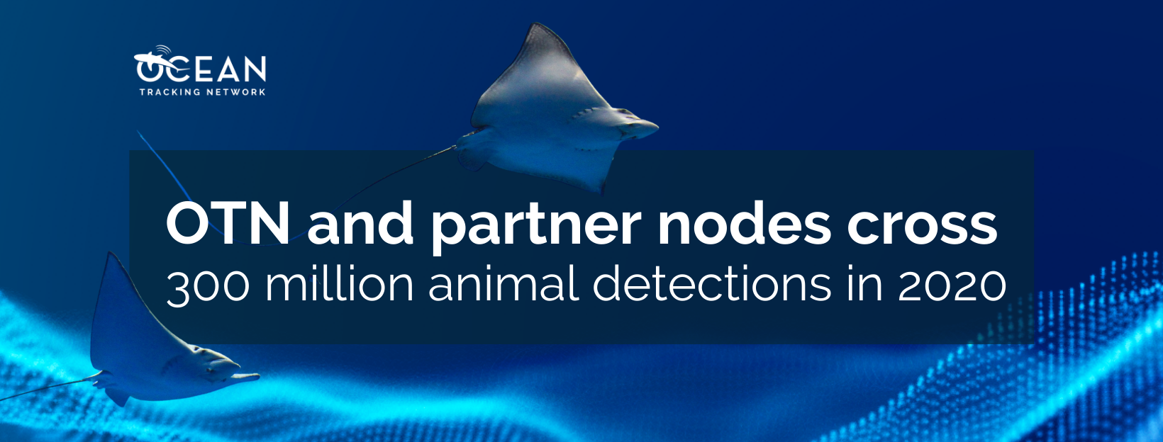 OTN and partner nodes cross 300 million animal detections in 2020